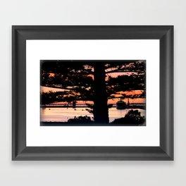 Early morning behind a Norfolk Pine Framed Art Print