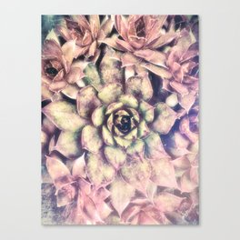 Sempervivum, Succulent Red  Mandala Canvas Print