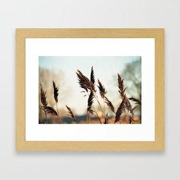 A fresh sunday morning Framed Art Print