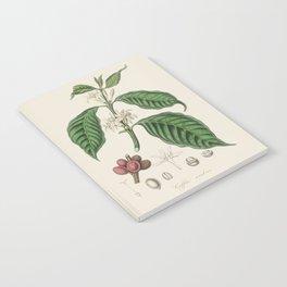 Vintage Coffee Bean Botanical Illustration Notebook