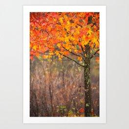 Autumn In Connecticut Art Print
