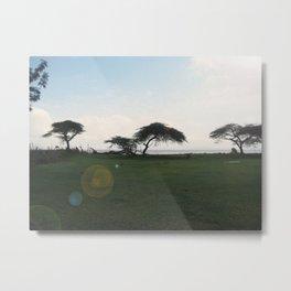 Acacia Field,Ethiopia Metal Print