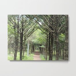 Oreum Forest Road, Jeju Island, Korea. Metal Print