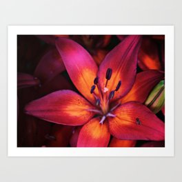 Ant on a Wood Lily Art Print