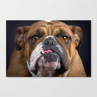 british Canvas Prints featuring British Bulldog by Best Light Images