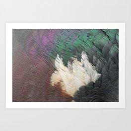 woodpigeon neck  detail feathers veren detail houtduif Art Print