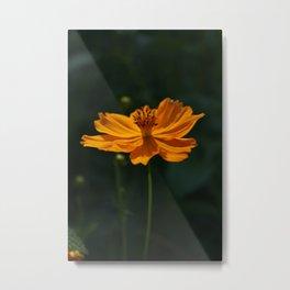 Orange Beauty by Mandy Ramsey, Haines, Alaska Metal Print