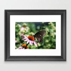 Eastern Tiger Swallowtail - Black Morph Framed Art Print
