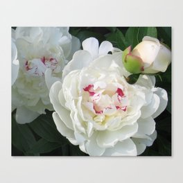 White Beauties Canvas Print