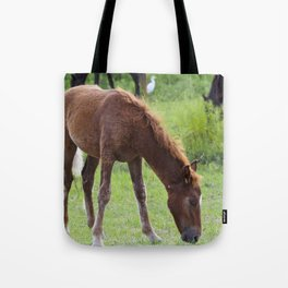 Wild Spanish mustang colt Tote Bag