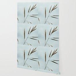 Beachgrass Seed Wallpaper