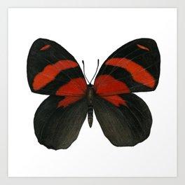 BD Butterfly Art Print
