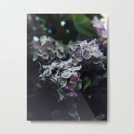 French lilac Metal Print