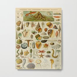 Ocean Animals Vintage Scientific Illustration French Language Encyclopedia Lithographs Educational D Metal Print