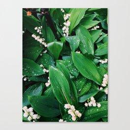 Summer freshness Canvas Print