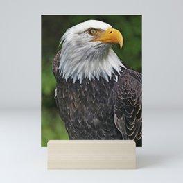 Bald Eagle 2 Mini Art Print