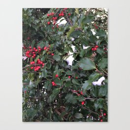 From a Winter's Walk Canvas Print