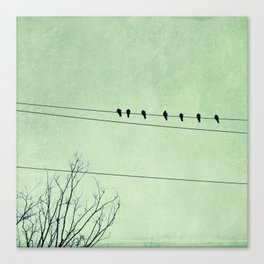 Birds on a Wire, no. 7 Canvas Print