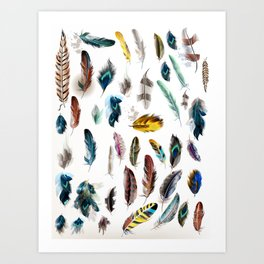 The big Feathers collection : Art Art Print