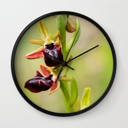 Cyprus Bee Orchid I Wall Clock