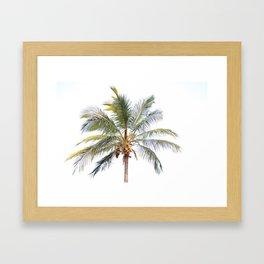 Coconut Palm Framed Art Print