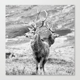 Stags - b/w Canvas Print