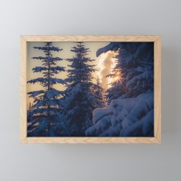 Midday sun on snow covered winter spruce trees Framed Mini Art Print