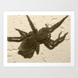 spider on the ceiling Art Print