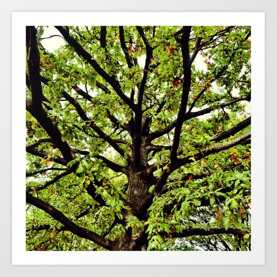 Leaves and Branches Art Print