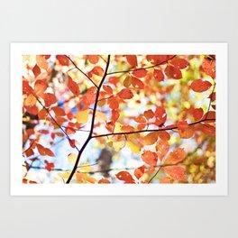 falls color Art Print