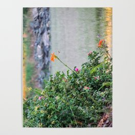 Low Tide Tiger Lillies Poster