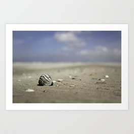 shell on the beach with a blue sky | nature photo | fine art photo print | travel photography Art Print
