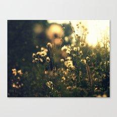 blured flowers Canvas Print