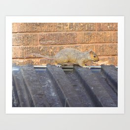 Squirrel; Southside Minneapolis, 2012. Art Print
