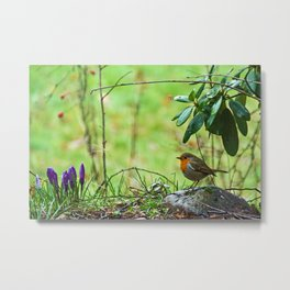 Robin in the spring Metal Print