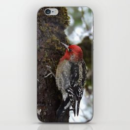 Red-Breasted Sapsucker in Christmas Snow iPhone Skin