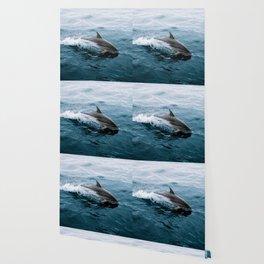 Dolphin in the Atlantic Ocean - Wildlife Photography Wallpaper