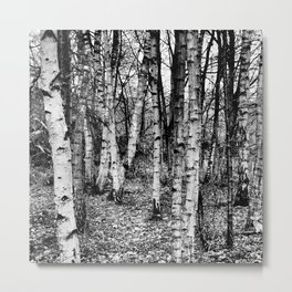 Staying on the Straight and Narrow Metal Print