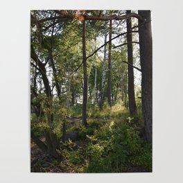magic wood Poster