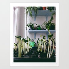 sprout Art Print