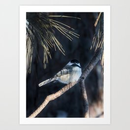 December Chickadee Art Print