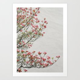 Pink Blossoms Against a White Wall Art Print