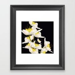 White Flowers On A Black Background #decor #buyart #society6 Framed Art Print