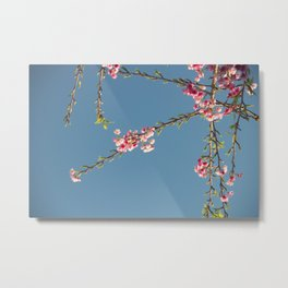 Romantic cherry flower Metal Print