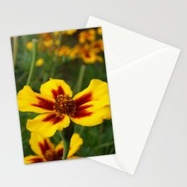 Yellow Marigold Flowers Stationery Cards