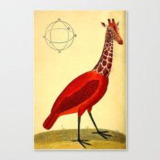 Bird Giraffe Canvas Print
