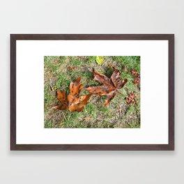 Fall Is Spot On Framed Art Print