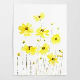 yellow cosmos flowers watercolor Poster
