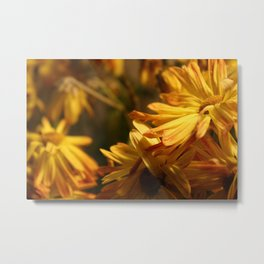 Daisys for Days  Metal Print