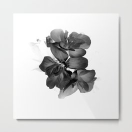 Black Geranium in White Metal Print